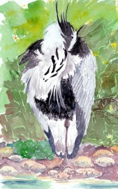 standing heron