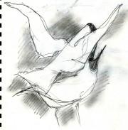 mating Black headed gulls (2)