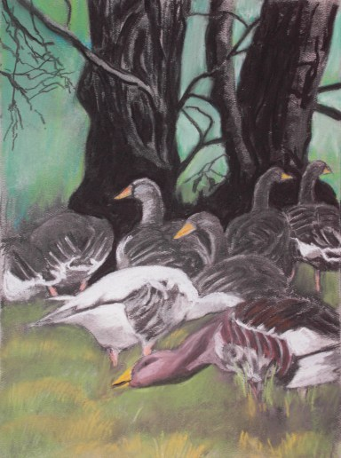 grazing greylag geese: evening