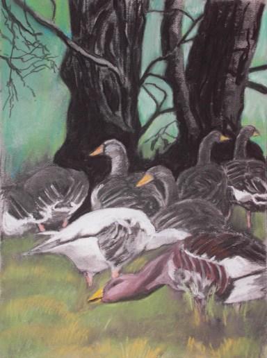 grazing greylag geese: evening