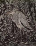 Juvenile heron autumn 2011