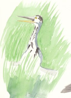 Heron emerging from the long grass