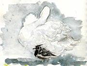 preening swan and lapwing