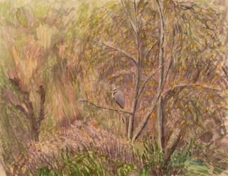 Heron in woodland. Watercolour.