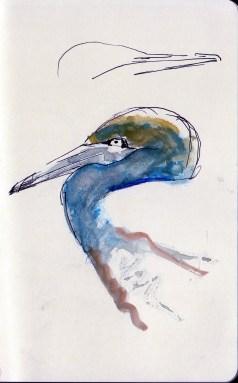 gannet nesting on Bass Rock (11)