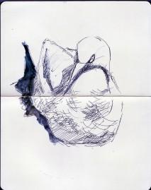 gannet nesting on Bass Rock (12)