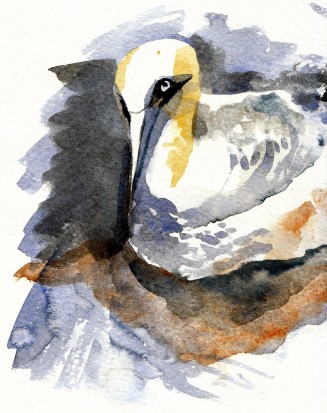 gannet nesting on Bass Rock (2)