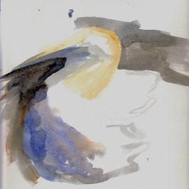 gannet nesting on Bass Rock (2A)