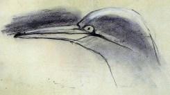 gannet nesting on Bass Rock (7)
