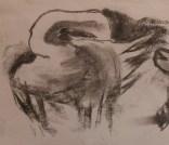 Preening swan: charcoal