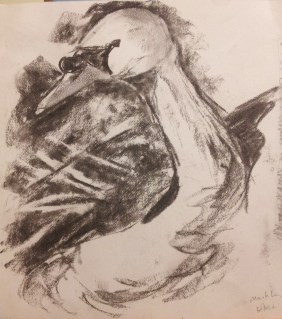 Charcoal sketch: swan 30th June