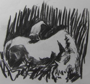 Cattle egrets 1