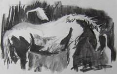 Cattle egrets 2
