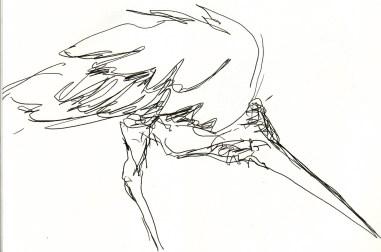 herons 20 (11)