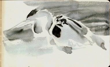 herons 20 (2)