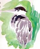 herons 20 (5)
