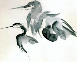 herons 20 (6)