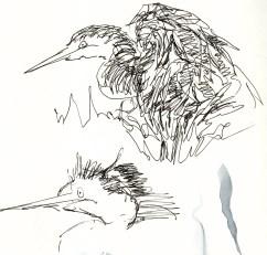 herons 20 (7)