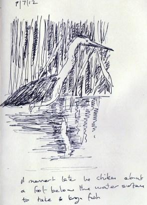 herons 20