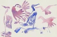 mixed birds - Mallorca August 2012