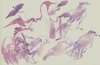 mixed birds - Mallorca 2012