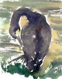 cormorants Marsh Lane 23 12 2012 (10)