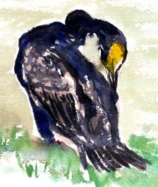 cormorants Marsh Lane 23 12 2012 (2)