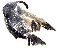 cormorants marsh lane 23 12 2012 (3)