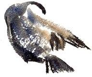 cormorants Marsh Lane 23 12 2012 (5)