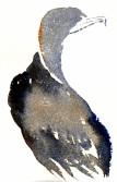 cormorants Marsh Lane 23 12 2012 (6)