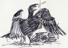 cormorants Marsh Lane 23 12 2012 (8)
