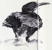 cormorants Marsh Lane 23 12 2012 (9)