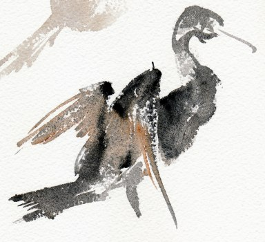 cormorant - watercolour