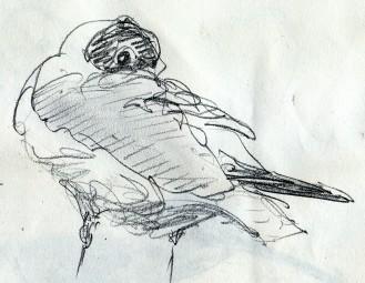 20130426 (5)