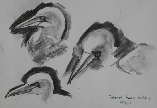 Capturing the shape of the gannet's head.