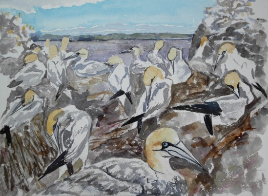 Gannets on Bass Rock: watercolour sketch on site
