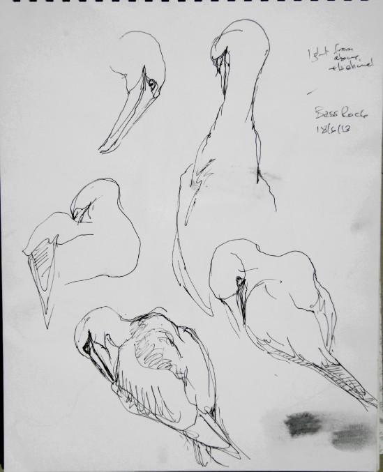 20130618 Bass Rock gannets 1