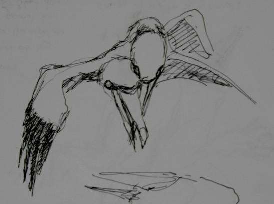 20130618 Bass Rock gannets 10