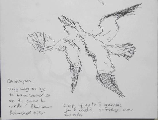 20130618 Bass Rock gannets 4