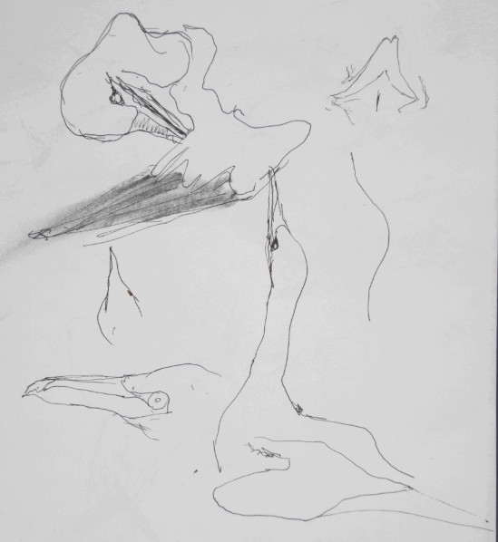 20130618 Bass Rock gannets 8