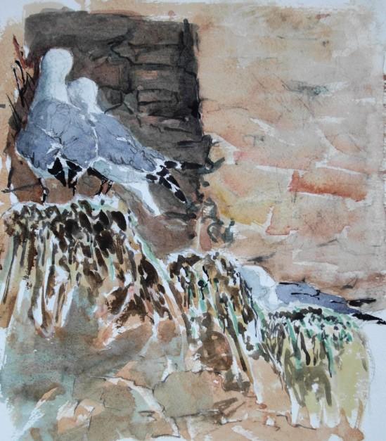 Nesting Kittiwakes in Dunbar Harbour