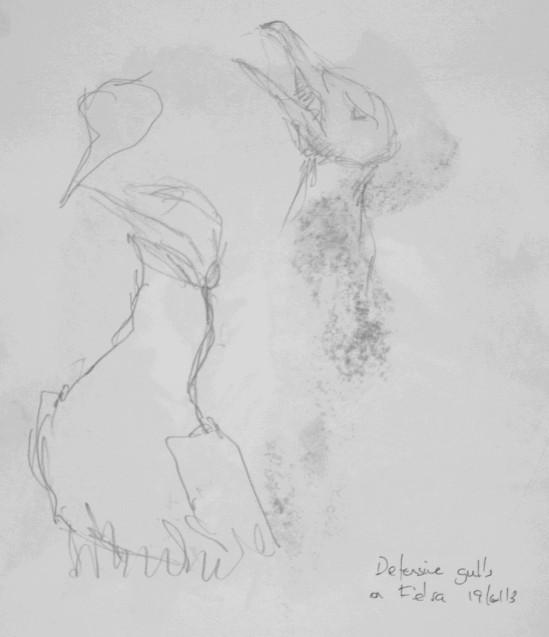 Herring gull sketches