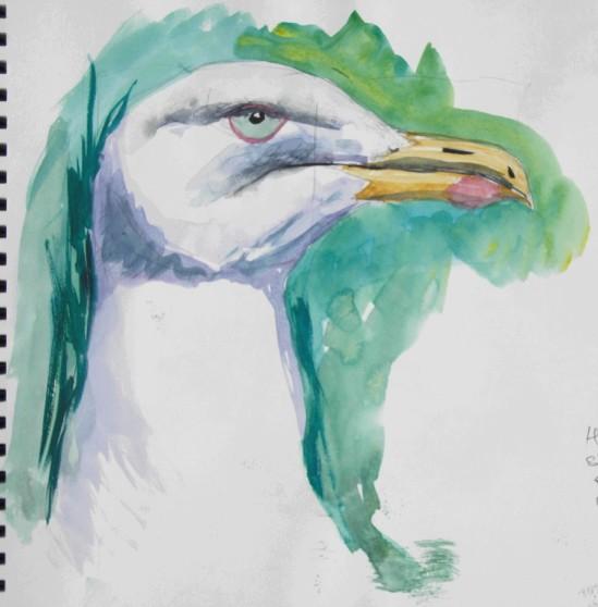 Close view of herring gull