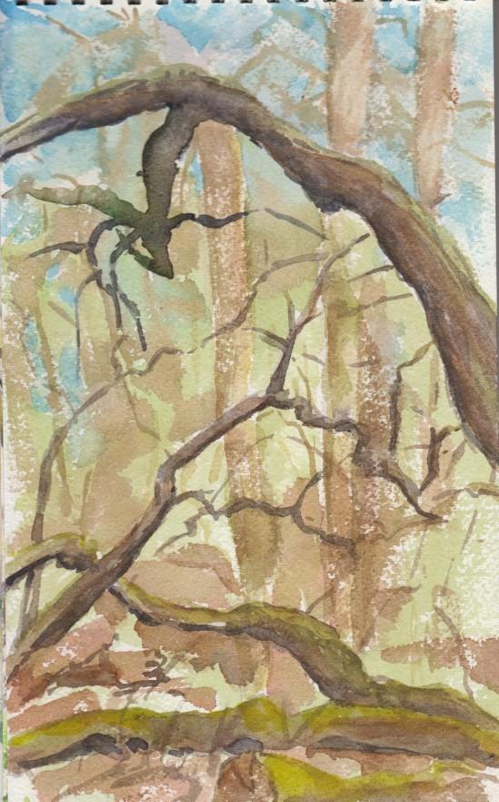 201305 Sidden Wood 01
