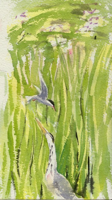 201307 02 heron