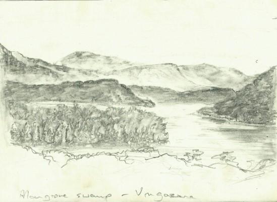 mangove swamp (2)