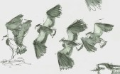 group of flyng lapwings