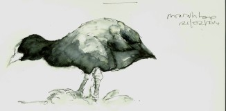 20140221 (10)