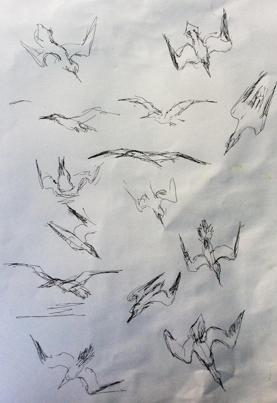 2014-07-16 feeding gannets (1)