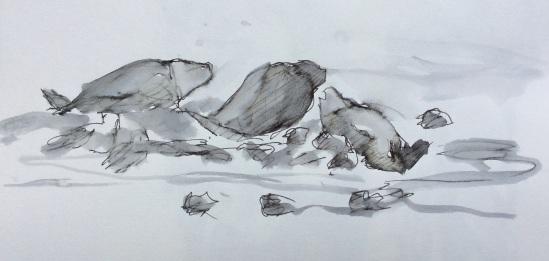 2014-07-17 Seals at Holy Island (3)